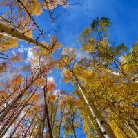 """""""Autumn Season Sunshine"""" by lightningman"""