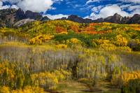 Colorado Kebler Pass Fall Foliage