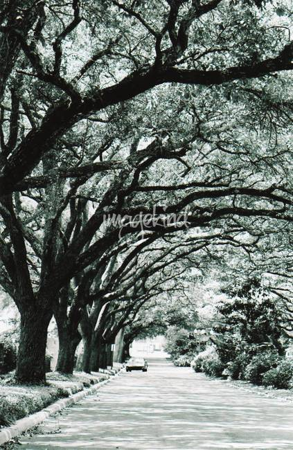 Stunning live oak artwork for sale on fine art prints for Fine art gallery online