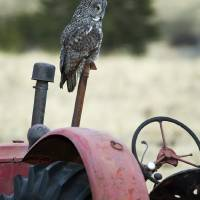 Great Grey Tractor by Thirteenth Avenue Photography
