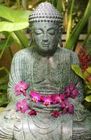 Buddha with Orchids by Carol Groenen