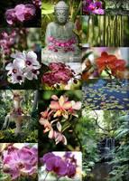 Tropical Paradise by Carol Groenen