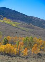 Autumn Aspens, Summer Meadow