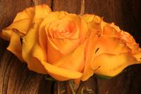 Yellow Roses Next to Wood