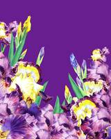 Iris Flowers Purple Sky