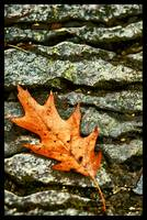 Leaf on the Rocks