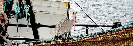 Pelican and fishing boat