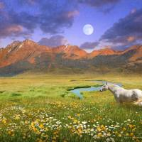 wide world of abundance, wild horse by r christopher vest