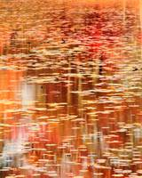 Autumns color reflections on the Lily Pond