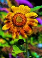Vibrant Sunflower