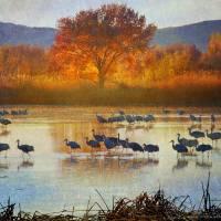 """the cranes return"" by rchristophervest"