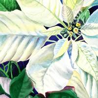 White Christmas Poinsettia Painting
