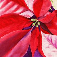 Red Christmas Poinsettia Painting