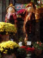 Scarecrows and Mums