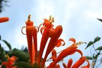 Orange Flowers Against Blue Sky