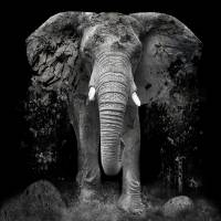 The Disappearance of the Elephant Art Prints & Posters by Erik Brede