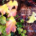 Sanbusco Vines by Kris Courtney