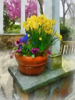 Daffodils and Pansies in Flowerpot