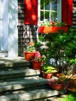 Flower Pots and Red Shutters