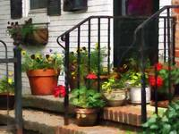 Pansies and Geraniums on Stoop
