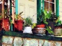 Plants on Porch