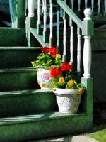 Geraniums and Pansies on Steps