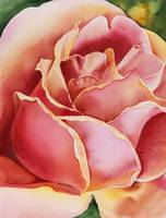 Pink Rose Realistic Watercolor Painting