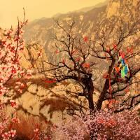 Mt. Huashan, China Art Prints & Posters by David Hui