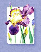 Iris Flower On Baby Blue Watercolor Decor