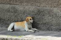 Dog Next to a Wall