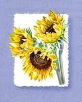 Sunflowers On Baby Blue