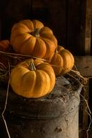 Three Pumpkins on a Bucket