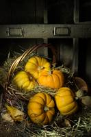 Pumpkins in a Basket 2
