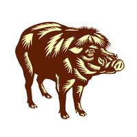 Philippine Warty Pig Woodcut