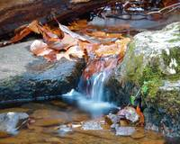 Fall Leaves and little waterfall