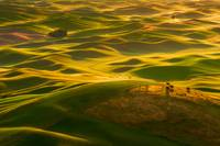 Palouse Swells