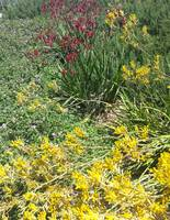 Red and Yellow Plants