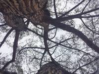 Looking up at Tree