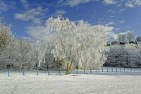 Frosted Trees, Newton Road Park
