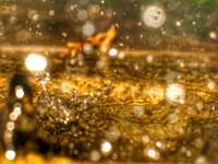 RAIN PUDDLE ABSTRACT #8, 30 NOVEMBER 2015