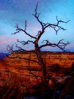Lonely tree looking over the Grand Canyon