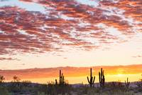 Sonoran Desert Colorful Sunrise Morning