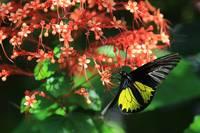 Beautiful Flowers Beautiful Butterfly b by Carol Groenen
