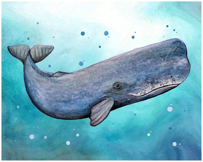 Stunning Quot Sperm Whale Quot Artwork For Sale On Fine Art Prints