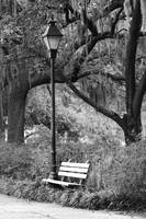 Savannah Bench in Black and White by Carol Groenen