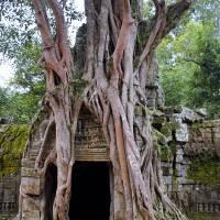 Angkor Temple Ta Prohm Siem Reap Cambodia Art Prints & Posters by brian raggatt
