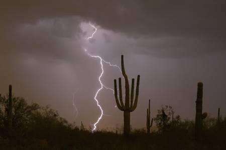 Giant Saguaro Desert Lightning Strike