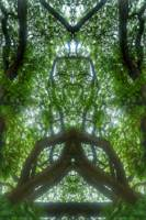 ABSTRACT PENANG TREES #4317, EDIT C