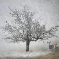 lone tree kestral and deer by r christopher vest