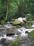 Tennessee Mountain Stream